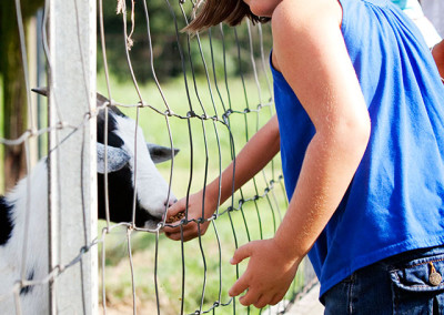 Girl feeds goat at Thompson farm