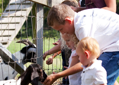 Kids feed goats