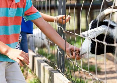 Feeding the farm animals