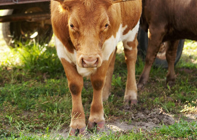 Farm animals at the Nursery