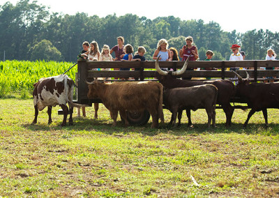 Children enjoying the farm