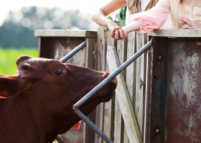 kids feeding farm animals