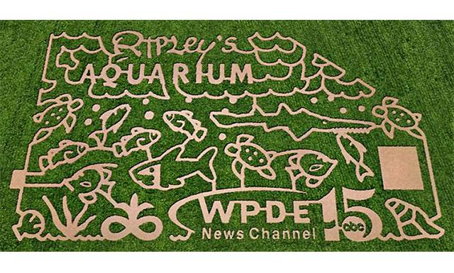 2013 10-Acre Corn Maze