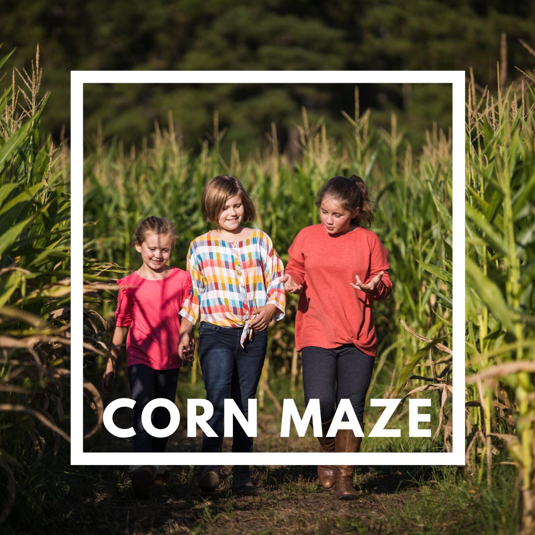Children in Corn Maze