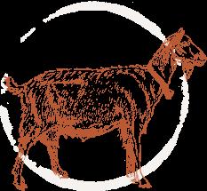 activity-goat